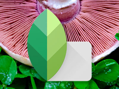 Snapseed Photo Editor